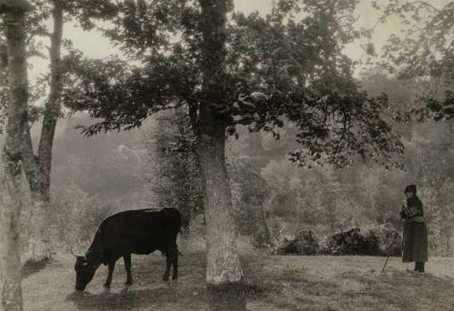 Vaca debaixo dun árbol. Nome do fotógrafo