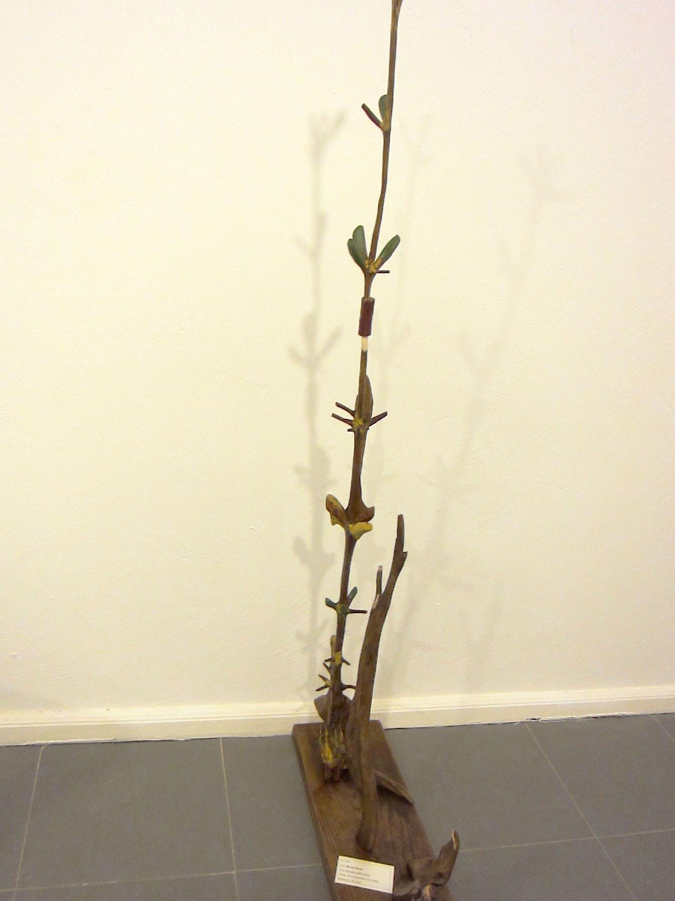 manuel-pardo-museo-da-fonsagrada